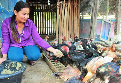 Chicken Raising: Improving Livelihood and Living Conditions